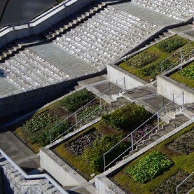Los beneficios de las cubiertas vegetales