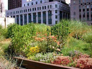 Cubiertas vegetales en terrazas