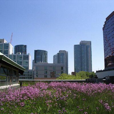 Las cubiertas vegetales pasarán de tendencias a una necesidad en las principales ciudades