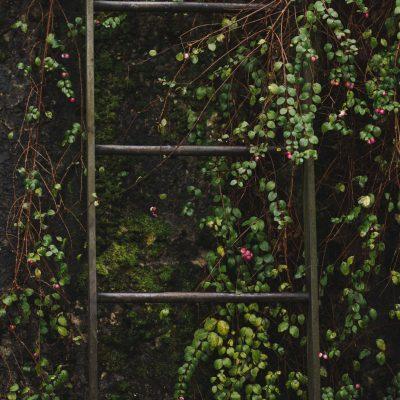 Mostrar lo distintos jardines verticales en el mundo
