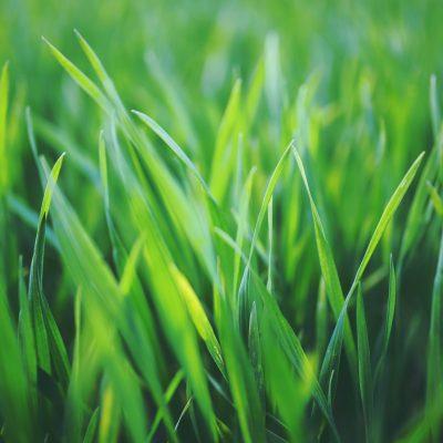 Terraza vegetal, los mejores pastos para climas cálidos