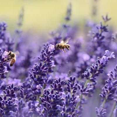Un muro vegetal con abejas es beneficioso