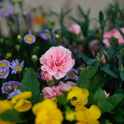 Jardines en azoteas: las mejores flores para diseñarlo