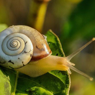Terrazas ajardinadas: Sus principales plagas y cómo reconocerlas