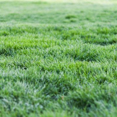 Techo verde, los mejores pastos para climas fríos